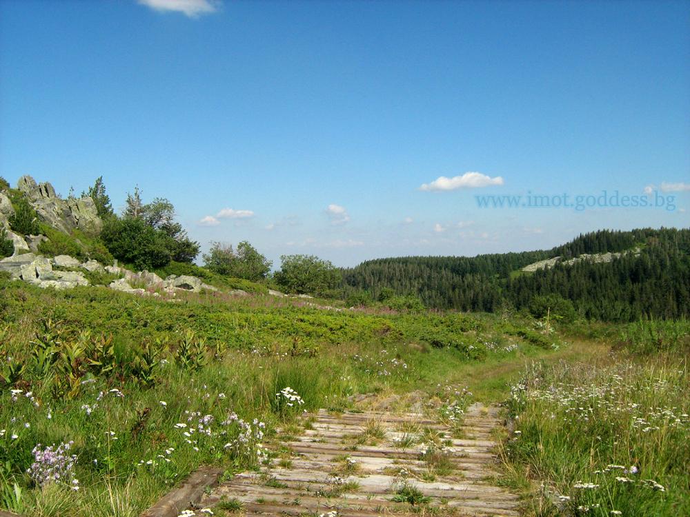 Дървена пътека в планина Витоша